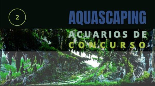 Mantenimiento y diseño de acuarios para concurso, parte 2.